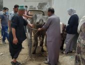 محافظ كفر الشيخ: برنامج تدريبى لتأهيل خريجى الطب البيطرى وتحصين 48675 طائرًا