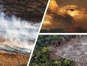 أمريكا اللاتينية مغطاة بالدخان.. 6000 حريق بأمازون البرازيل فى أغسطس.. و11 ألف حريق فى الأرجنتين وأكثر من 16 ألفا ببوليفيا والمكسيك تخمد 70 يوميا.. النيران دمرت 700 نوع من النباتات والحيوانات