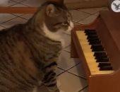 قط يعزف على البيانو لإبلاغ صاحبته بالجوع فى أمريكا.. فيديو