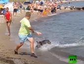 خنزير برى بين المصيفين على شاطئ ألمانيا.. فيديو