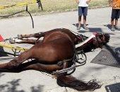 جريدة إيطالية تنشر صور نفوق حصان فى كاسيرتا بسبب ارتفاع درجات الحرارة