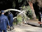رفع شجرة سقطت بطريق طلخا المحلة وإعادة حركة السيارات من جديد