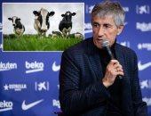 حصاد كيكى سيتين فى 217 يومًا مع برشلونة بعد العودة لمزرعة الأبقار