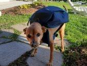 """تعرف على سبب حصول الكلب """"لويجى"""" على لقب """"الأكثر إخلاصا"""" فى إيطاليا"""