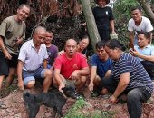 العثور على كلب فقد 25 كيلو من وزنه بعد بقائه تحت أنقاض انهيار أرضى 37 يوم