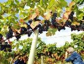 خبراء: تغير المناخ فى أوروبا يفرض تغييرات جديدة على المحاصيل الزراعية