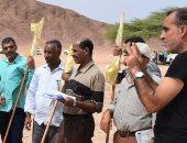 """""""الزراعة"""": لجان مسح للجراد الصحراوى بالمناطق الحدودية..وتؤكد: الوضع آمن"""