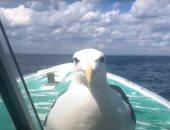 صداقة فريدة من نوعها بين قبطان سفينة وطائر نورس.. اعرف القصة