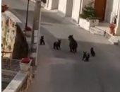 دبة وأبناؤها الأربعة يثيرون الذعر فى بلدة إيطالية.. فيديو