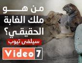 خدعوك فقالوا.. الأسد ملك الغابة.. شوف الملك الحقيقي بحلقة جديدة من سيلفي تيوب