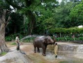 حيوانات أقدم حديقة فى العالم بفيتنام تفتقد الزوار بسبب كورونا ..ألبوم صور