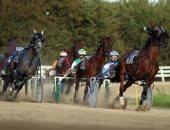 اتمخترى واتمايلى يا خيل.. صراع القوة والأصالة والتراث فى سباقات الخيول ببريطانيا.. ألبوم صور