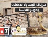 """أشهر صائد زواحف بمصر الكوبرا الذكر ممكن يجامع """"أنثيين"""" فى وقت واحد"""