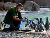 حديقة حيوان لندن تتحدى كورونا والإفلاس بالقرد والبطريق والسنجاب .. ألبوم صور