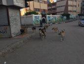 اضبط مخالفة.. الكلاب الضالة تغزو الشوارع بالقرب من حى أول المحلة بالغربية