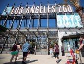 حديقة حيوانات لوس انجلوس تستقبل الزائرين بعد إعادة افتتاحها.. ألبوم صور