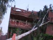 سقوط شجرة على منزل يتسبب فى قطع أسلاك الكهرباء بشبين القناطر