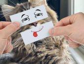 أسترالى يضع 20 وجها على قططه ليعطيها مشاعر عشوائية.. صور