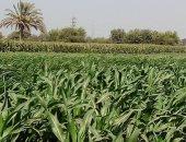 تعرف على أهم الاحتياطات والتوصيات الزراعية الواجب اتباعها فى التقلبات الجوية