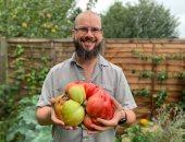 بريطانى يسجل رقما قياسيا بزراعة أكبر ثمرة طماطم فى المملكة المتحدة.. صور