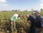 التعدى على الأراضى الزراعية خطر يهدد الأمن الغذائى.. أستاذ اقتصاد زراعى يوضح