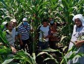 الحكومة تستهدف رفع نسبة الاكتفاء الذاتى من الذرة الصفراء لـ32% عام 2025
