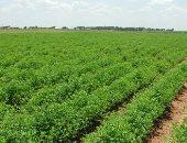 10 نصائح للمزارعين لمواجهة الآثار السلبية للظروف الجوية