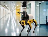 روبوت يخدم الزبائن فى مطعم بكوريا الجنوبية لضمان التباعد الاجتماعى