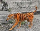 «الكلب النمر» يثير الغضب فى ماليزيا ومكافأة لمن يبلغ عن الجانى.. صور