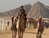 "فيديو.. ""يورونيوز"" تعرض تقريراً مصوراً عن سباق الهجن فى مصر وتحدى فيروس كورونا"