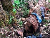أمريكى ينجو من الموت بعد البقاء تحت شجرة لمدة 4 أيام