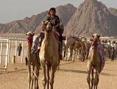 10 معلومات عن أول سباق هجن تنشيطى بشرم الشيخ فى ظل إجراءات احترازية ضد كورونا