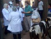 الزراعة لجان بيطرية لعمل برامج تلقيح الماشية وتوفير دعم مراكز الألبان