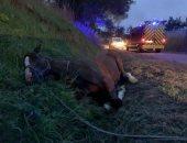 فرنسا تعتقل مشتبه به فى ارتكاب جرائم قتل وتشويه للخيول فى البلاد