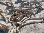 اكتشاف 200 هيكل لـ حيوانات الماموث خلال بناء مطار فى المكسيك.. من قتلها