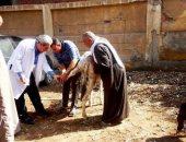 صور .. بيطري الشرقية: حملات على رؤوس الماشية لمكافحة الطفيليات الداخلية