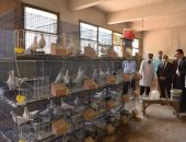 فيديو وصور.. رئيس جامعة أسيوط : تخصيص 4 مليون جنيه لتطوير مزارع الدواجن والماشية