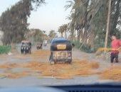 شكوى من تجمع المخلفات الزراعية فى طريق المريوطية السياحى بالجيزة