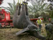 شاهد.. نقل فيل بعد إزعاجه السكان إلى مكان أخر خالٍ من البشر