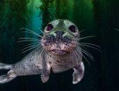 """""""نعيم تحت الماء""""..  شاهد الأعمال الفائزة فى مسابقة فن المحيط.. ألبوم صور"""