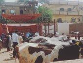 الزراعة تجرى تلقيحا صناعيا لـ85 ألف رأس أبقار وجاموس.. اعرف الفوائد