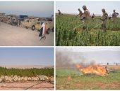 القوات المسلحة تنفذ دورية للقضاء على الزراعات المخدرة بجنوب سيناء وتدمر 146مزرعة