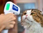 دراسة توضح سبب إصابة بعض الحيوانات بفيروس كورونا