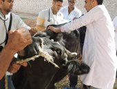 محافظ أسيوط: بدء تنفيذ الحملة القومية لتحصين الماشية ضد الحمى القلاعية