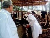 تحصين 18540 رأس ماشية ضد الحمى القلاعية والوادى المتصدع بالبحيرة