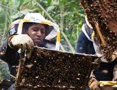 منظمة اليونسكو تحذر من تهديد أنشطة البشر حياة وبقاء النحل