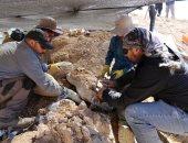متخصصون يعثرون على بقايا زاحف مائى مفترس بتشيلى عمره 160 مليون عام