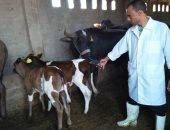 الزراعة تعلن ترقيم وتسجيل 96 ألف رأس ماشية لتحسين السلالة