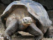 إعادة عشرات السلاحف المهددة بالانقراض إلى موطنها بالإكوادور بعد خضوعها لحجر صحى