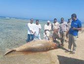 """وزيرة البيئة تؤكد نفوق حيوان عروس البحر """"الدوجونج"""" بمرسى علم  نتيجة لحادث عارض"""